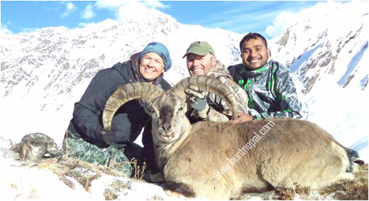 BLuesheep hunting In Nepal